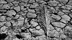 Dry (Marcus Vinicius Felix) Tags: ifttt 500px black white bw dry