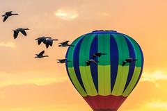 boise balloon clasic-09-01-16-34 (Ken Folwell) Tags: sunrise balloons geese orange idaho canon5dmkiii clouds boise