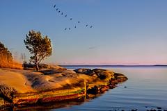 September 30th Welcome Indian summer. (BirgittaSjostedt) Tags: landscape scene water sea coast rockl stone bird autumn indiansummer seascape migratorybirds serene sweden birgittasjostedt ie outdoor sky magicunicornverybest