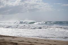 DSC05097 (neilreadhead) Tags: awt1 hawaii oahu waimeabay