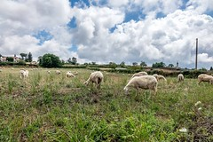 (Mickey Katz) Tags: travel blue vacation sky italy green beautiful beauty field grass clouds photo amazing europe sheep awesome culture dramatic goat tourist greece feed agriculture herd breathtaking bestshot supershot flickrsbest amazingphoto abigfave anawesomeshot artistsoftheyear overtheexcellence flickrlovers breathtakinggoldaward