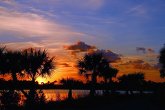 Sunset & Palm Trees (tclaud2002) Tags: blue trees sunset sky florida palm palmtree su fortpierce bluesly georgelestrangepreserve