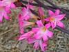 NZA-05 - 2015-02-26 - DSC_7644 (bix02138) Tags: newzealand flora northisland napier february26 2015 napiernewzealand aotearoanewzealand clivesquare day5newzealandaustralia2015