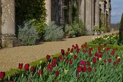 1108-36L (Lozarithm) Tags: derryhill bowood gardens paths flowers tulips k50 smcpda1770mmf4alifsdm justpentax pentax zoom 1770