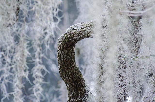 Moss Fountain DSL1712