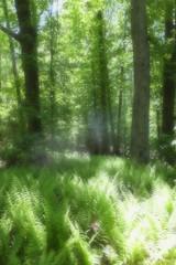 Ferns (michbunny) Tags: ferns statenisland greenbeltnaturecenter
