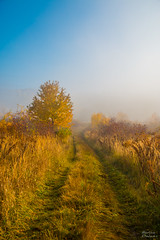 Road to nowhere (Martina Klvaov) Tags: morning autumn trees mist tree nature fog landscape czech outdoor brno moravia