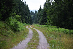 Way into the forest - Weg in den Wald (Lala89_Photos) Tags: way weg strase road forest wald black blackforest schwarzwald green grn nature natur