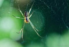 (Marko Rautavesi) Tags: insect bug macro nikon d610 nikkor 55mm
