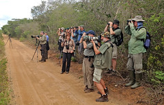 Birdwatchers in action