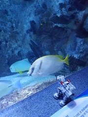 Spaghetti the AT-AT Visits The Aquarium! (godpasta) Tags: lego atat newportaquarium aquarium fish