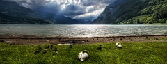 Swanburst (Elliott Bignell) Tags: switzerland suisse svizzera schweiz ostschweiz walenstadt walensee lake see walen gebirgssee berge berg bergsee mountains mountain alps alpen alpine alp swan schwan storm gewitter birds water