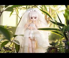 DSC09848-Edit2 (Haku1923) Tags: doll dollfie dollfiedream mdd wedding sal135f18z a7rii