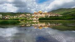 Gyeltang Sungtseling Gonpa, Tibet 2015 (reurinkjan) Tags: tibet  2015  janreurink tibetanplateaubtogang kham gyeltangcounty sangrila gyelthangteng gyeltangsungtselinggonpa mirrorlikelake reflection lhamoyangtso
