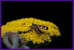 AH62_8140 (der_andyrandy) Tags: blumen blte insekt macro outdoor art amazingamazing thisphotorocks wow canoneos7d