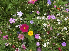 I found a flower meadow (rotraud_71) Tags: meadow flowers colorful explore badreichenhall infinitexposure