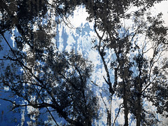 (Rossdxvx) Tags: textured texture textures tree trees outdoor outdoors 2016 overlay overexposed contrast urban surreal surrealism silhouette abstract art