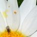 Springtails in the garden