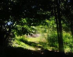 El camino hacia la gloria (Sersio_Photographer) Tags: corua del conde fotografodecoruadelconde fotos con vaselina