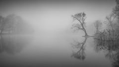 Sound of Silence (Jaques10000) Tags: nikon d5100 havelland brandenburg landscape landschaft seascape monochrome morning silence trees longexposure ndfilter blackwhite reflections tree mist