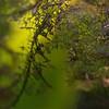 _IGP9049_web (Erik Koffmar) Tags: leaf autumn höst löv grön green koffmar norby uppsala sweden pentax k10d macrodreams