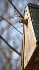 bird at work :) (:: edgar 37 :: 1.8 Million + views :: THANKS !!) Tags: tree bird germany thringen spring nest german baum birdnest borderline vogel grenze niedersachsen abflug flown schneaussicht eichsfeld ausflugslokal innergermanborder ef70200mmf4lisusm canoneos5dmarkii