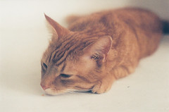 shhhhhh... (sara.robin) Tags: film cat 35mm zenite
