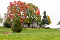 House with oversized Trees_0428 (hkoons) Tags: ranch autumn trees orange plants sunlight canada color green fall field grass leaves pine rural forest season flora colorful bright farm fallcolors farming grain sunny soil dirt crop fields crops aggie agriculture yellows deciduous reds firs conifer implements saintlawrenceriver quebecprovince ledorlans
