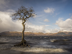 The Tree in the Loch (Damian_Ward) Tags: mountains tree scotland oak loch lochlomond milarrochybay milarrochy damianward damianward