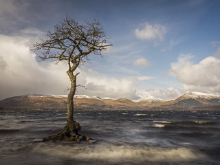 The Tree in the Loch