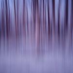 IR woods