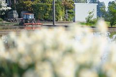 DS7_7232.jpg (d3_plus) Tags: street sky plant nature japan walking spring nikon scenery bokeh outdoor fine daily telephoto  tele streetphoto toyama nikkor ricefield gw    dailyphoto   johana thesedays 80200mm 80200 hokuriku   fineday      8020028 80200mmf28d   80200mmf28    80200mmf28af  d700   nikond700  nikonfxshowcase aiafzoomnikkor80200mmf28sed