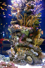 (frankiejeanie) Tags: ocean light sea fish canada tourism water canon fun eos aquarium colorful underwater pacific sealife tourist pacificocean knowledge stanleypark vancouveraquarium tropics corals stanlypark touristspot coloful sevenseas tinyfish 70d vancouvercanada canonphotography colorfulfish touristdestination inthesea canoncameras tropicalwater colorfulcorals canoneos70d