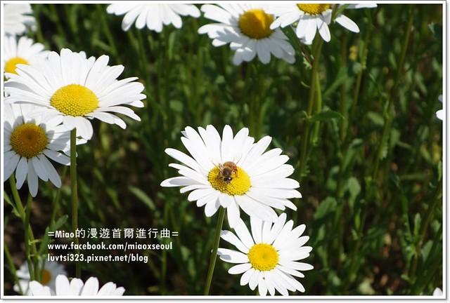 벽초지문화수목원72