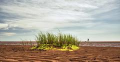 Tea Hill (Alex Bruce Photo) Tags: beach grass clouds sand tide princeedwardisland ripples pei teahill dogwalking