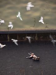 (Rick Elkins Trip Photos) Tags: mumbai maharashtra india dog seagull