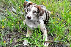 Puppy Felix (cogdogblog) Tags: dog felix