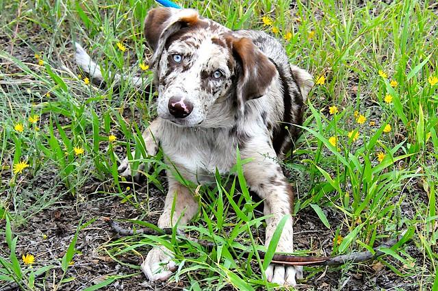 Puppy Felix