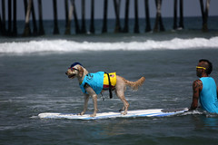 "Surf Dog Competition-EK-073016 (76) • <a style=""font-size:0.8em;"" href=""http://www.flickr.com/photos/25952605@N03/28110526904/"" target=""_blank"">View on Flickr</a>"