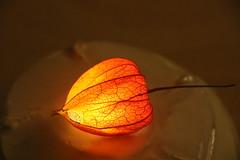 Red soft light (yukky89_yamashita) Tags: light art japan tokyo glow exbition 目黒雅叙園 和のあかり