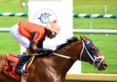 2016-07-15 (33) r2 Alex Cintron on #7 Cool Arrow (JLeeFleenor) Tags: photos photography md maryland marylandhorseracing jockey   jinete  dokej jocheu  jquei okej kilparatsastaja rennreiter fantino    jokey ngi horses thoroughbreds equine equestrian cheval cavalo cavallo cavall caballo pferd paard perd hevonen hest hestur cal kon konj beygir capall ceffyl cuddy yarraman faras alogo soos kuda uma pfeerd koin    hst     ko  outside outdoors