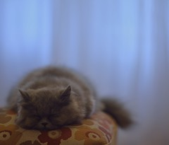 Time To relax (Emir Cykman) Tags: nikon nikond5200 nikkor 50mm 50mmlens photografa photographie photography portrait cat kitty kitten gatita gata