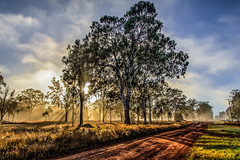 On the road home (jan_clewett) Tags: sunrise queensland country road eucalypt morning sunrays forest early newday