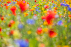 Blurry Eyed Bayside (Geraint Rowland Photography) Tags: uk flowers blue red painterly abstract blur art nature wales canon bokeh cardiff poppies wildflowers colourful photographicart photoslikepaintings cardiffbaybarrage naturesabstract visitwales geraintrowlandphotography visitcardiffbay