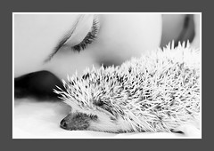 Tenderness and Spikes (webcentric) Tags: girl hedgehog animal animals beautiful cute pet spikes spines