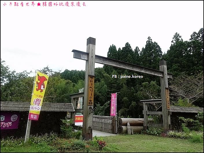 木更津藍莓園 (2).JPG