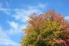 Fall (Michael Daum) Tags: nikon d700 50mmf18af nikkor fall sky tree leaves