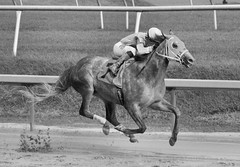 2016-08-21 (40) r9 Sheldon Russell on #7 Made Bail (JLeeFleenor) Tags: photos photography md maryland laurelpark racing bw blackwhite monochrome jockey   jinete  dokej jocheu  jquei okej kilparatsastaja rennreiter fantino    jokey ngi horses thoroughbreds equine equestrian cheval cavalo cavallo cavall caballo pferd paard perd hevonen hest hestur cal kon konj beygir capall ceffyl cuddy yarraman faras alogo soos kuda uma pfeerd koin    hst     ko  wet muddy sheldon russel sheldonrussell