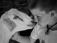 P9251350.jpg (DWO630) Tags: goats bw black blackandwhite em10ii livestock m43 micro43 monochrome nokton olympus primelens statefairofvirginia va virginia voigtlander voigtlander25mm095 voigtlander25mm095manualfocus white
