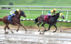 2016-08-21 (35) r9 Gabriel Saez on #1 Totally Drenched (JLeeFleenor) Tags: photos photography md maryland laurelpark racing jockey   jinete  dokej jocheu  jquei okej kilparatsastaja rennreiter fantino    jokey ngi horses thoroughbreds equine equestrian cheval cavalo cavallo cavall caballo pferd paard perd hevonen hest hestur cal kon konj beygir capall ceffyl cuddy yarraman faras alogo soos kuda uma pfeerd koin    hst     ko  wet muddy
